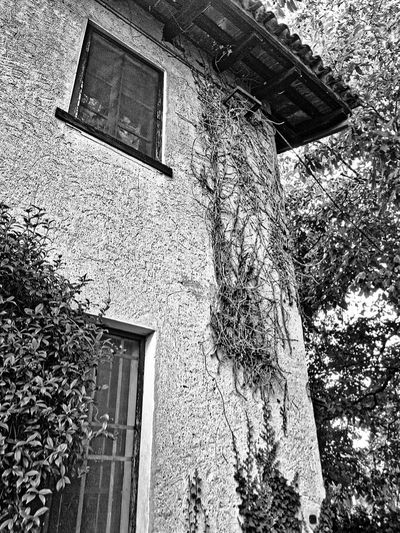Built Structure Low Angle View Architecture Building Exterior Day House Rural Scene Rural Landscape North Italy Window Nature Black & White Blackandwhite Trip Photo Eurotrip Outdoors No People Ivy