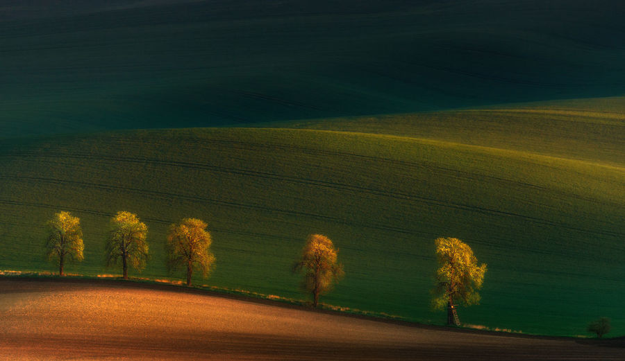 Five piligrims...Shadows on the fields.Five lonely trees in moravian fields at colorful sunset in Czech Republic. Spring landscape with sunny countryside valley. Golden hour, warm color from the spring sun. Valley Agriculture Czech Environment Farmland Field Field Landscape Light Meadow Moravian Nature Piligrim Plant Rural Scene Shadow Slope Springtime Sunlight The Great Outdoors - 2017 EyeEm Awards Tranquility Tree Tuscany Landscape Velvet Wave