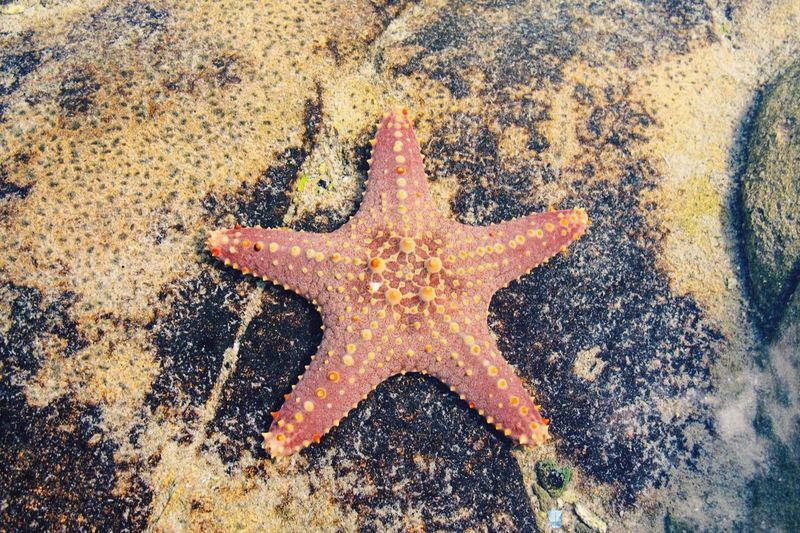High angle view of starfish at rocky beach
