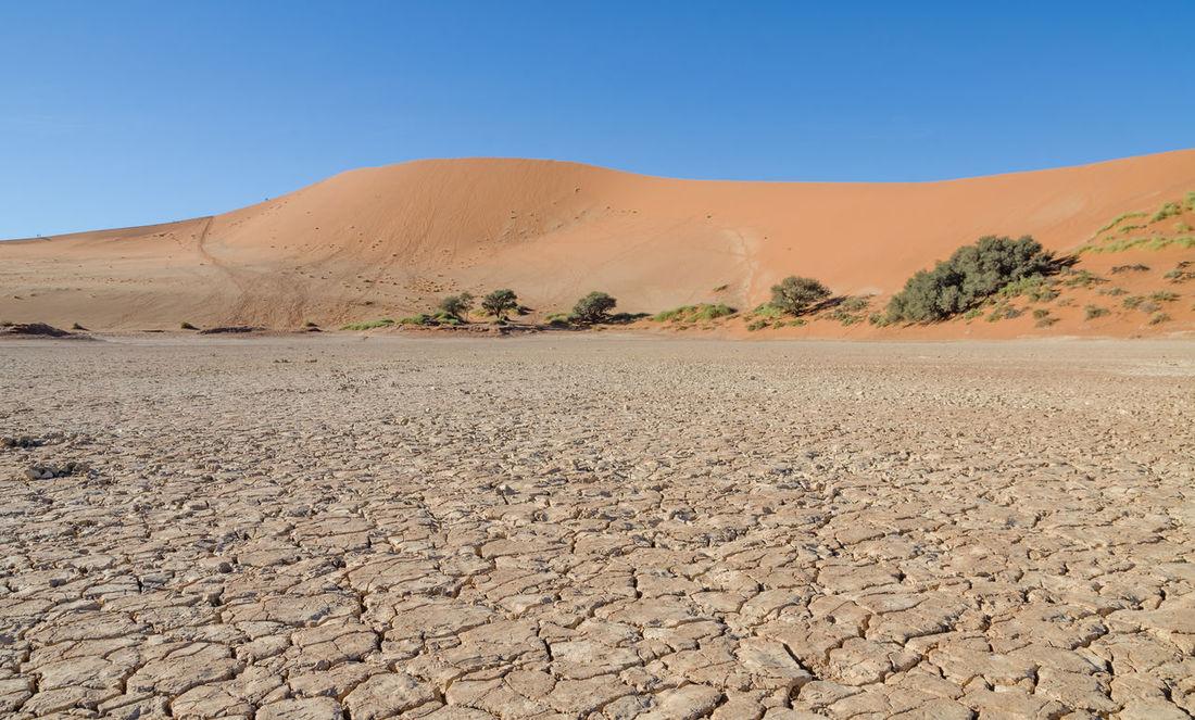Drought Sand Dune Tree Dead Tree Sesriem, Namibia Sesriem Namib Desert Namib Desert Sossusvlei Landscape African Africa Namibia Nature Barren Arid Landscape Salt Basin Salt Flat Eroded Extreme Terrain Geology Arid Extreme Weather