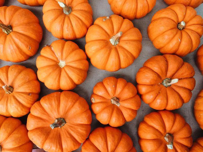 Full frame shot of pumpkins during autumn