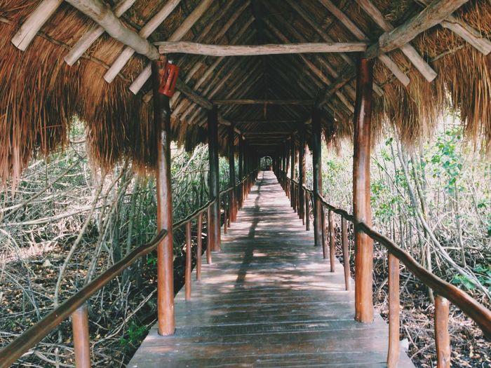 Learn & Shoot: Leading Lines este Puente de madera en medio de la selva. Puente Wilde Jungle Travel Original Experiences Feel The Journey Mein Automement On The Way