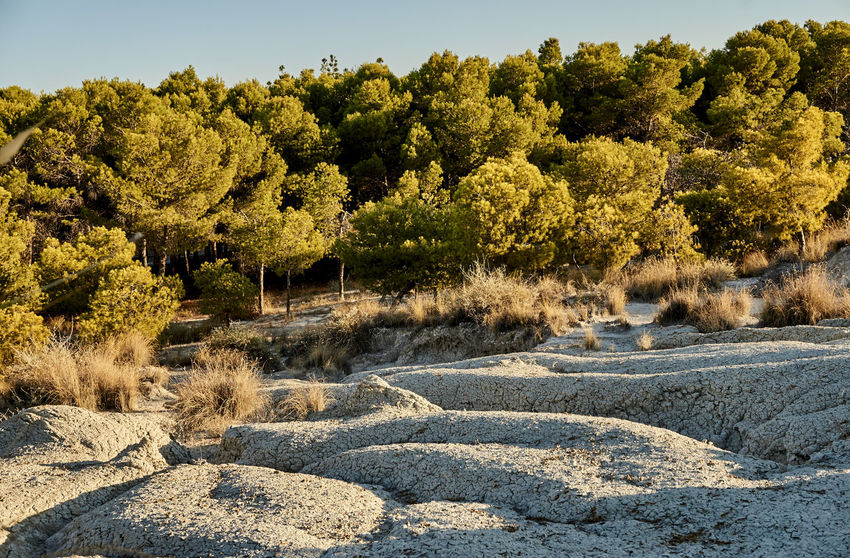 Arid Calabria Clay Desert Erosion Footpath Formal Garden Green Color Italy Marina Mediterranean  Nature No People Outdoors Palizzi Palizzimarina Plant Sunlight The Way Forward Tranquility Tree Wide