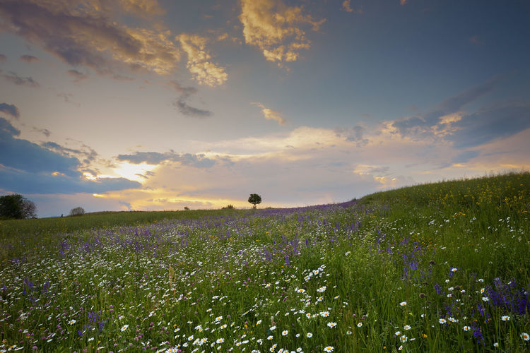 Beauty In Nature Cloud - Sky Environment Field Flower Flowerbed Flowering Plant Fragility Freshness Growth Land Landscape Nature No People Outdoors Plant Purple Scenics - Nature Sky Sunset Tranquil Scene Tranquility Vulnerability