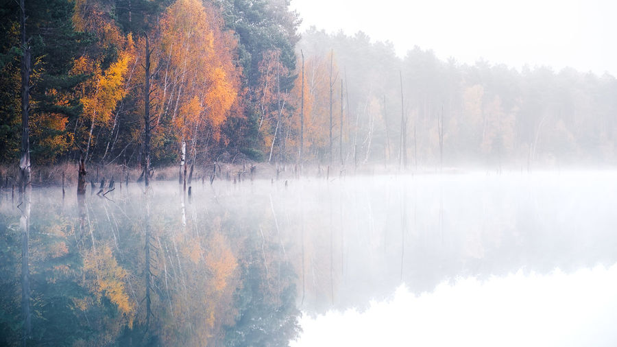 Autumn Beauty In Nature Change Color Day Fall Fog Forest Idyllic Lake Leaf Leaves Mood Nature No People Outdoors Scenics Sky Tranquil Scene Tranquility Tree Water