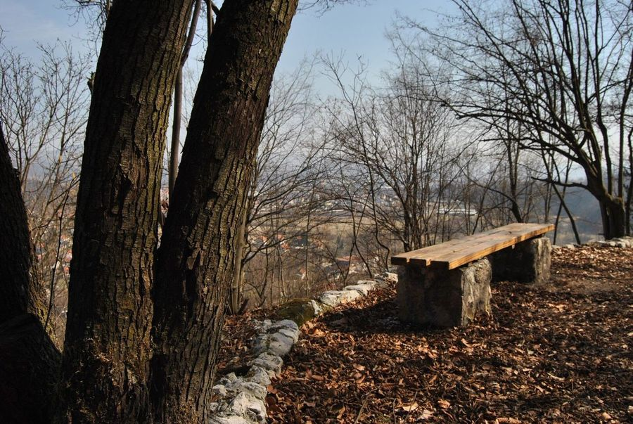Nature Nature_collection Cityscape Blue Landscape View Bench Forrest Tree Tree Plant Nature Tree Trunk Trunk No People Sky Architecture Day Bare Tree Sunlight Built Structure Outdoors Tranquility Branch