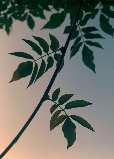 Close-up of leaves in lake against sky