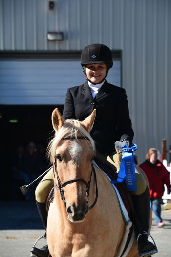 Horse Show Horse Palomino girl Girl Ribbon English Riding Winning Blue Ribbon Helmet