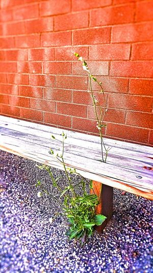 Nature Finds A Way Weeds Plant Life Bench Seat Quiet Moments Blooming Outside My Door....