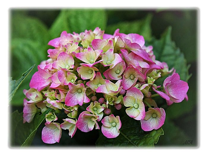 Flower Nature Beauty In Nature Petal Plant Growth Fragility No People Close-up Outdoors Day Freshness Leaf Pink Color Flower Head Blooming Tranquil Scene Landscape Beauty In Nature Nature France Green Color Tranquility Agriculture