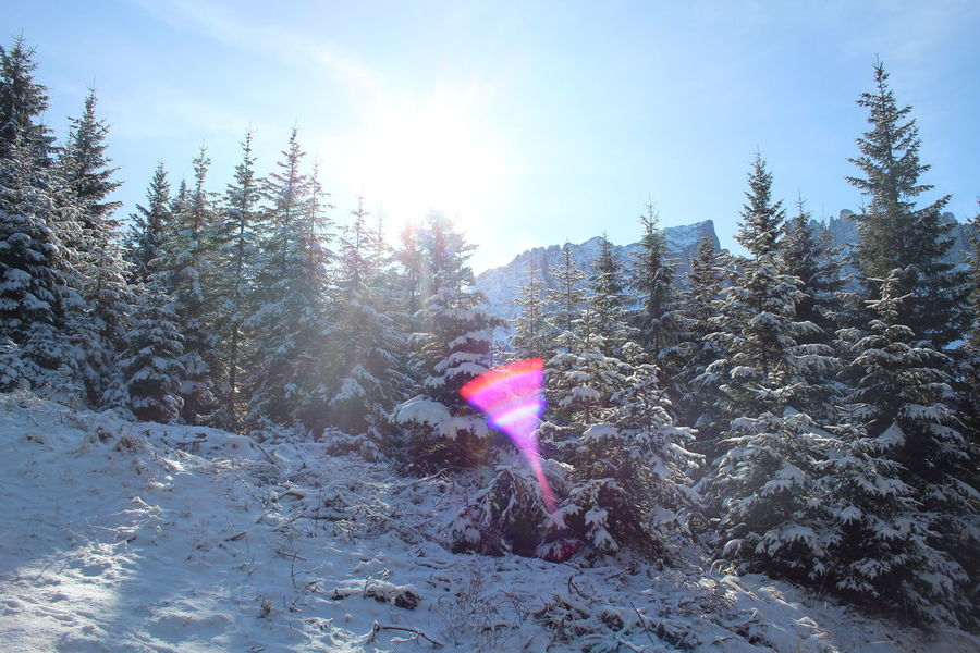 Adventure Beauty In Nature Bright Cold Temperature Day Forest Lens Flare Nature Non-urban Scene Outdoors Pine Tree Scenics Season  Sky Snow Sun Sunbeam Sunny Tourism Tranquil Scene Tranquility Tree Vacations White Color Winter