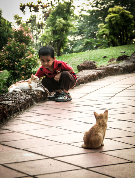 Boy With Cats Brother And Sister Cute EyeEm Best Shots Fall In Love Kitten Kittens Looking At Cat Love Cats Monk Cats Pet Cat Pets Petting Siblings Sitting Stray Stray Cat Stray Kitty Straycat Street Photography Streetphotography Togetherness Traveling In Malaysia Traveling Malaysia Watching