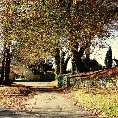 Photography Autumn Tree Road The Way Forward Leaf Outdoors No People Branch Day Growth Architecture Freshness Sunlight And Shadow Beauty In Nature Wall Built Structures