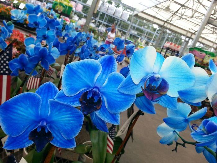Flowers :) Beautiful Colors