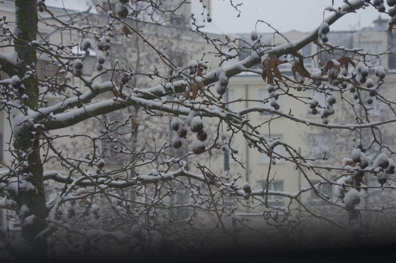 Bare tree in snow