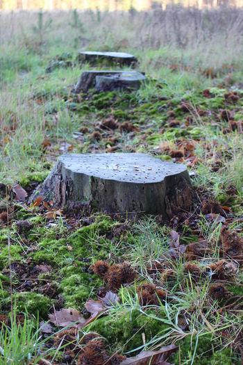 Damp Forest Forestground Forestopening Grass Horsechestnut Nature Norfolk Outdoors Stumps Treestumps