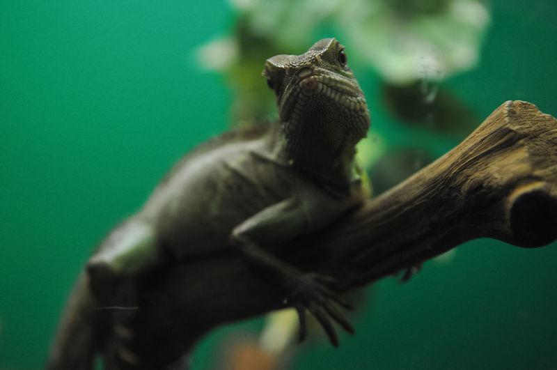 Close-up of reptile