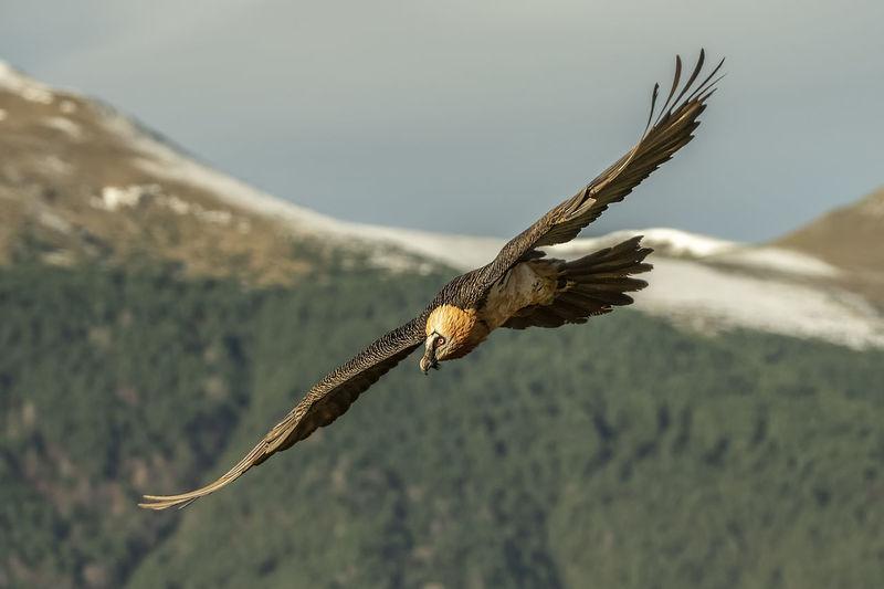 Full length of bird flying over landscape