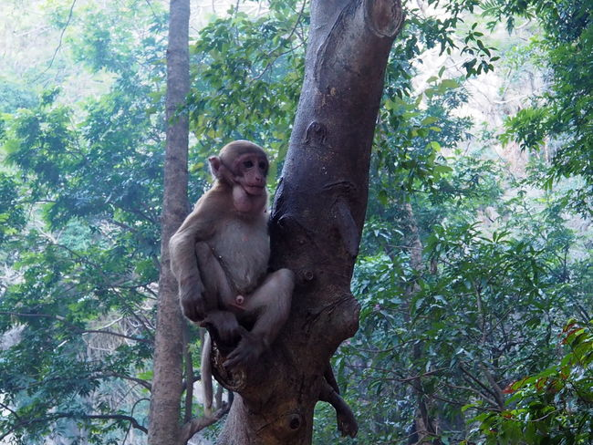 Funny monkeys A funny monkey lives in a natural forest of Thailand. Animal Themes Cute Pets Day Forest Fresh Mammal Monkey Mountain Nature No People Outdoors Plentiful