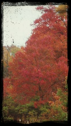 My favorite fall color