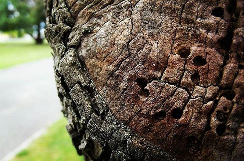 Wood Trunk Tree Texture Nature Frimleypark Hastings Hawkesbay NZ Newzealand Aotearoa Wmm_brown