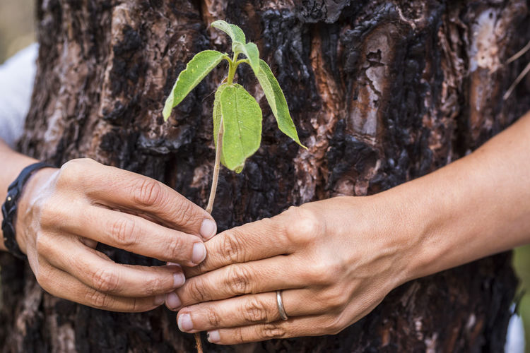 Close-up of woman hand holding plant around tree trunk