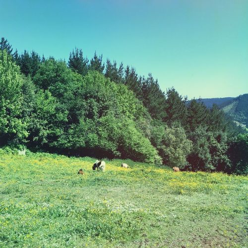 Tranquil Scene Nature Mountains Landscape Grass Field Clear Sky Beauty In Nature Domestic Animals Ponys Mountains Trees