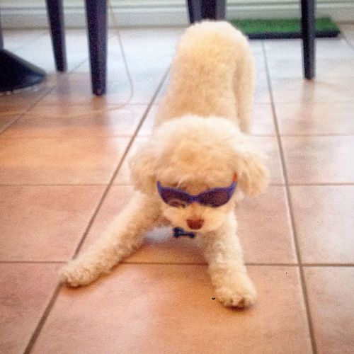 Pets Ilovermydog Swaggin Pet Love I Love My Dog Dogstagram Alvin