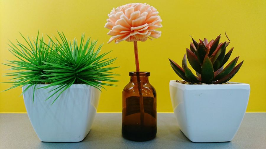 Artificial flower in bottle amidst potted plants on table against yellow wall