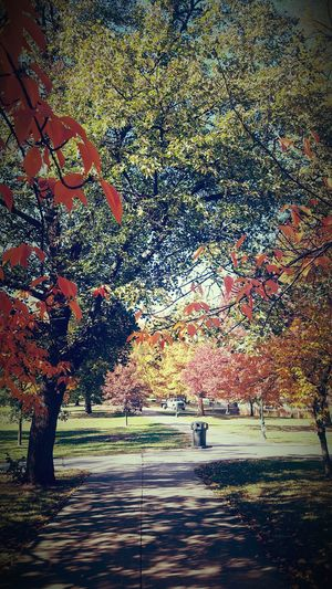 Autumn is a mood not a season lol 😂😍 No People Sunlight Tree No People Sunlight Tree Outdoors Day Nature Water Sky Backgrounds Beauty In Nature Close-up Forsale Beautiful Happy Jolly
