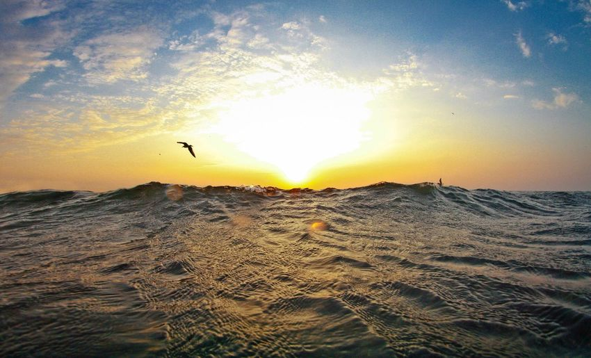 Bird flying over seascape during sunset