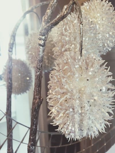 Close-up No People Cold Temperature Snow Indoors  Winter Hanging Beauty In Nature Day Fragility Nature