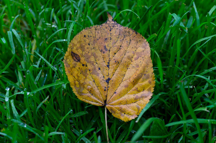 Loneliness Lonely Autumn Beauty In Nature Close-up Contrast Fragility Grass Green Color Leaf Nature Outdoors