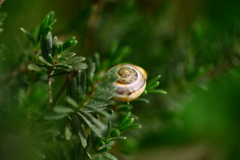 Animals In The Wild Bokeh Close-up Depth Of Field Detail Nature Small Snails In Grass Snail Wildlife