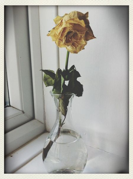 My rose is dead. Beauty Among The Wilted