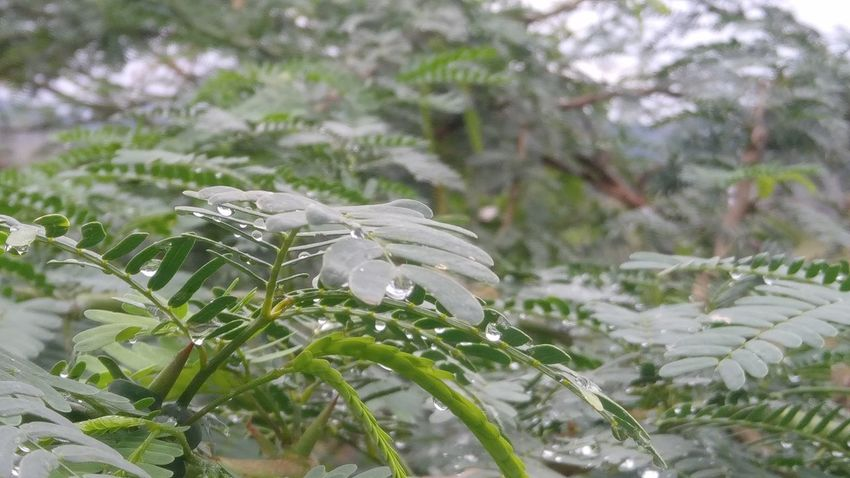 Beauty In Nature Close-up Fragility Freshness Growth Nature No People Outdoors Plant Tree Water Droplets On Leaves