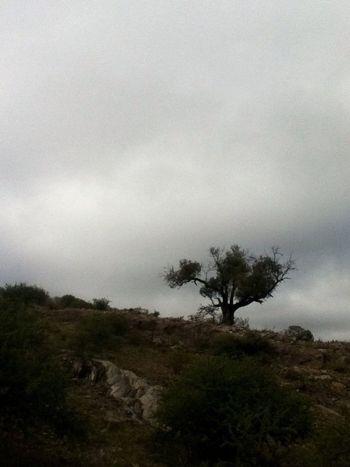 22 de abril : DÍA DEL PLANETA Trees Clouds And Sky Sin Filtros EyeEm Nature Lover