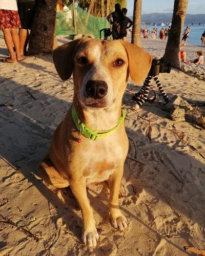 Goodest good boy Beach Dog Sand Shadow Canine