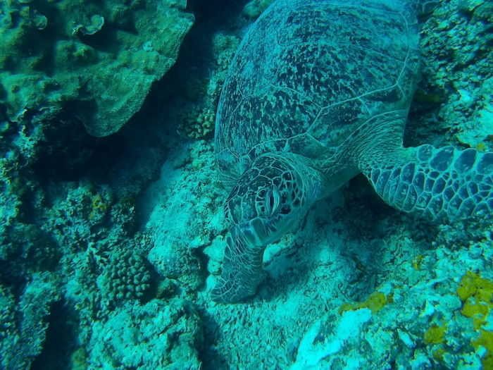 Turtle UnderSea Water Backgrounds Sea Science Full Frame Fishing Net Close-up Green Color Sea Life Underwater