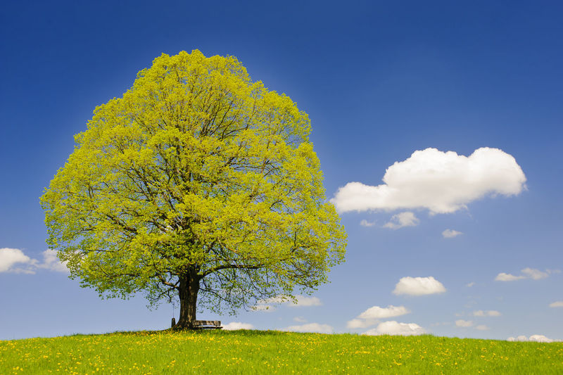 Yellow tree on field against sky