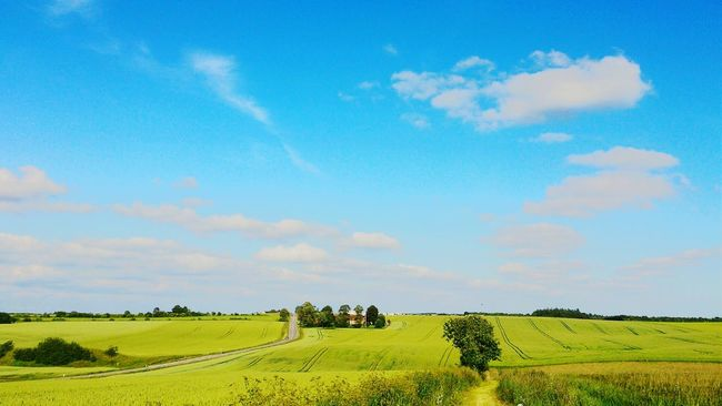 Taking Photos Denmark Summertime Sky And Clouds Fields Landscape Cloud Clouds Blue Sky Nature Field Fields Green