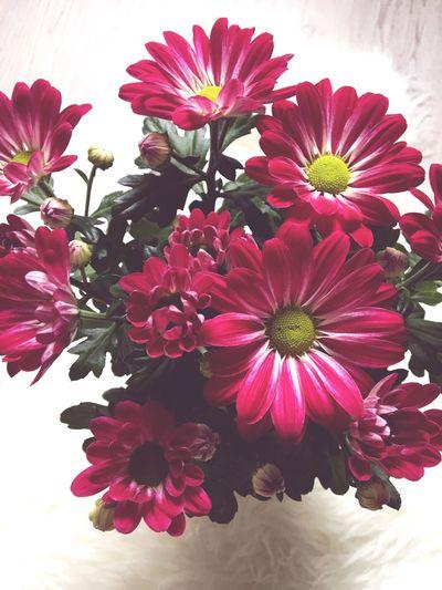Flower Flowers