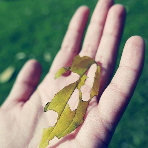 Cropped image of hand holding damaged leaf
