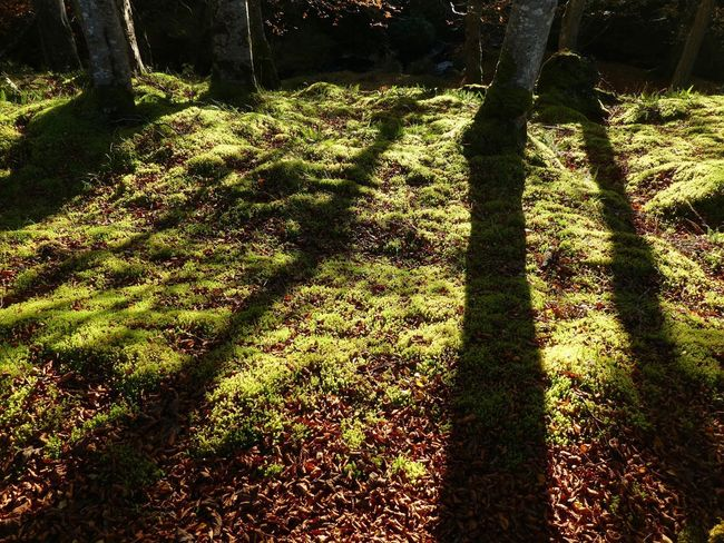 Autumn Shadows in Stornoway Autumn Isle Of Lewis WeatherPro: Your Perfect Weather Shot Isle Of Lewis Sunlight Shadow Nature Plant Day Grass High Angle View Field Tree Land Growth No People Outdoors Focus On Shadow Park Tranquility Beauty In Nature Autumn Mood