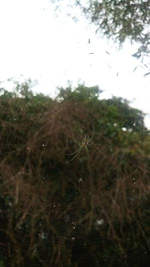 EyeEmNewHere Drop Nature Spider Web No People Window Day Outdoors Backgrounds Close-up Web Water Tree Beauty In Nature Fragility Sky Freshness