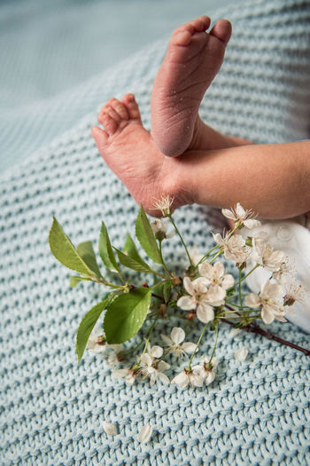 High angle view of hand holding flowering plant