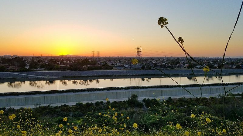 Flower Sunset Reflection Water Nature Agriculture Plant Growth Outdoors No People Sky Scenics Sunser Silhouettes Santaanariverbed Costamesa Sunset_collection Secret Places Fakesun