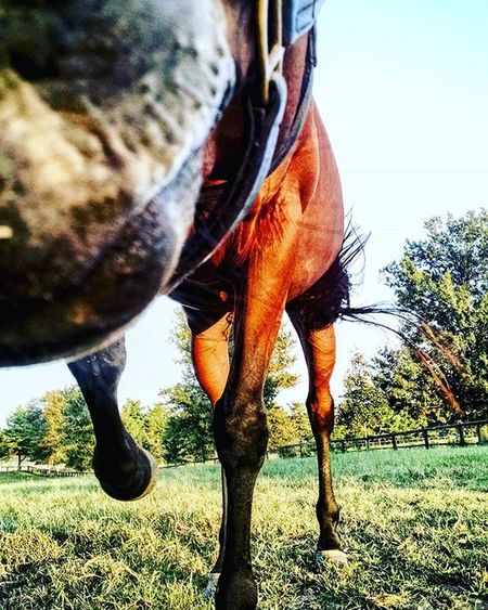 Horsing around! RamseyFarm Thoroughbred Selfies Farm Thoroghbredracing Selfies Nicholasvilleky Farms