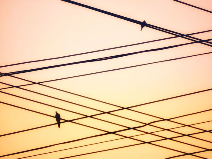 Low angle view of silhouette birds perching on cables against sky during sunset