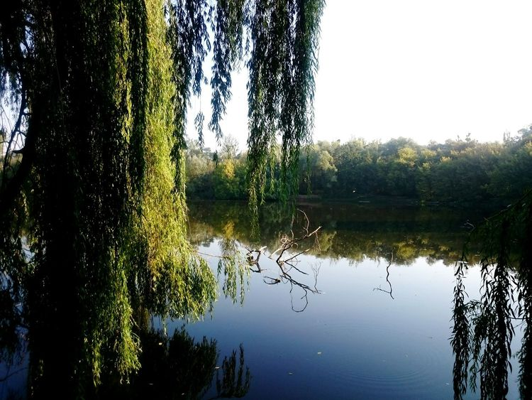 Morning view. Reflection Water Lake Tree Beauty In Nature Countryside Outdoors